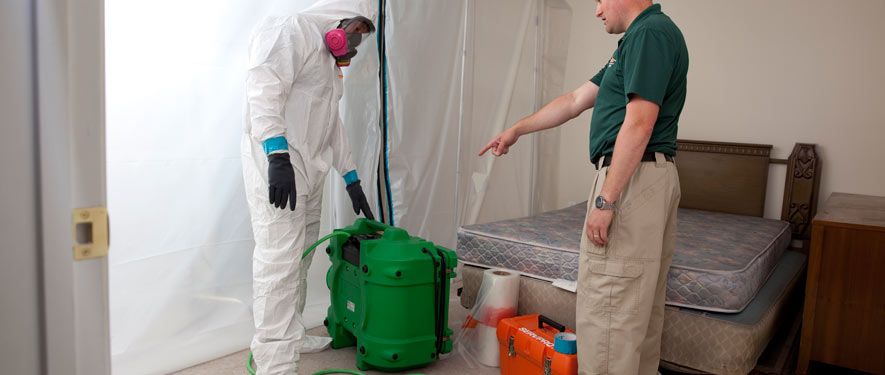 South Plainfield, NJ mold removal process